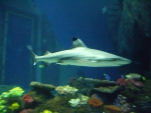 Aquarium Berlin Freunde finden Tiergarten Berlin