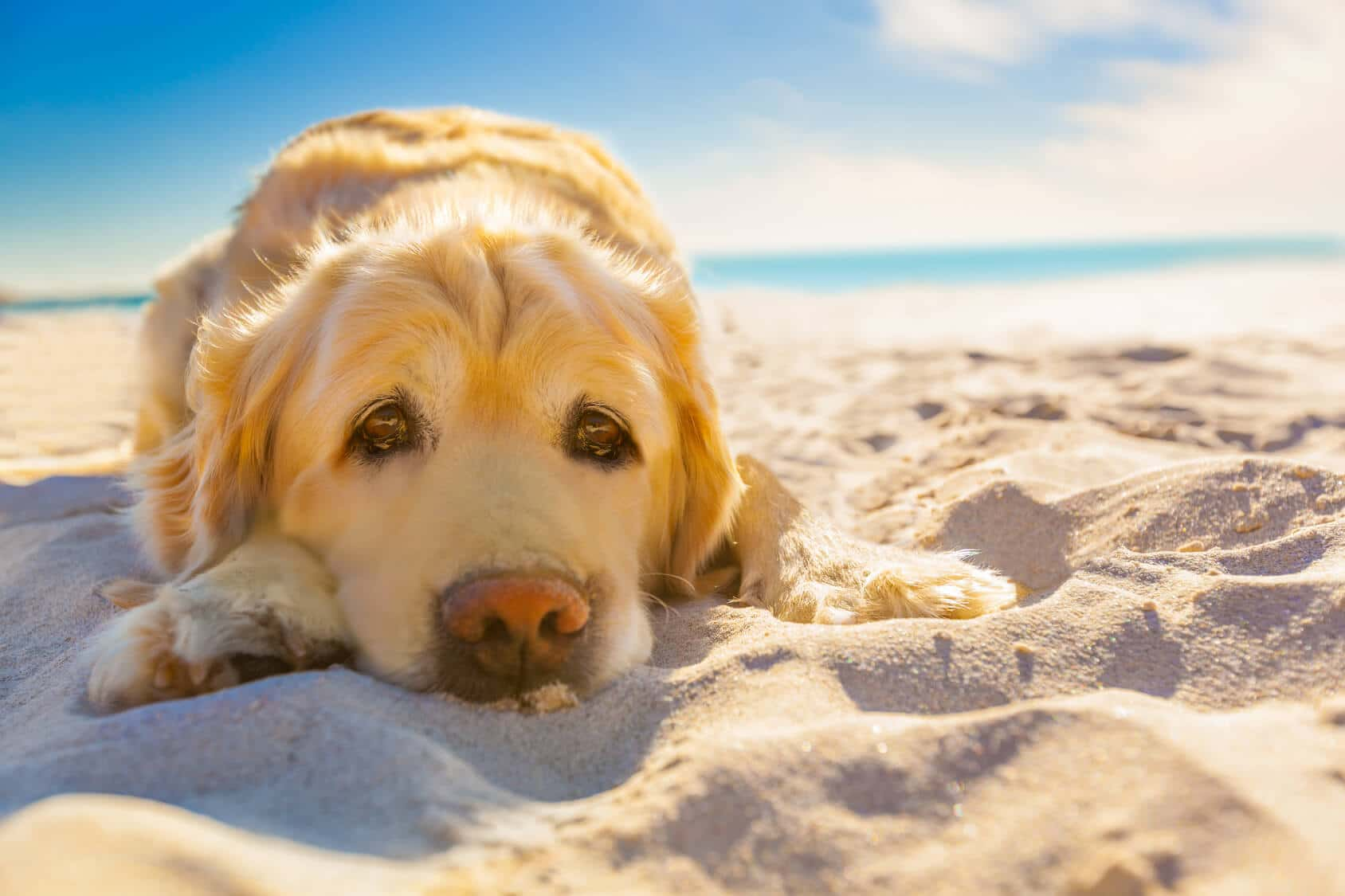 10 besten Gründe für einen Hund