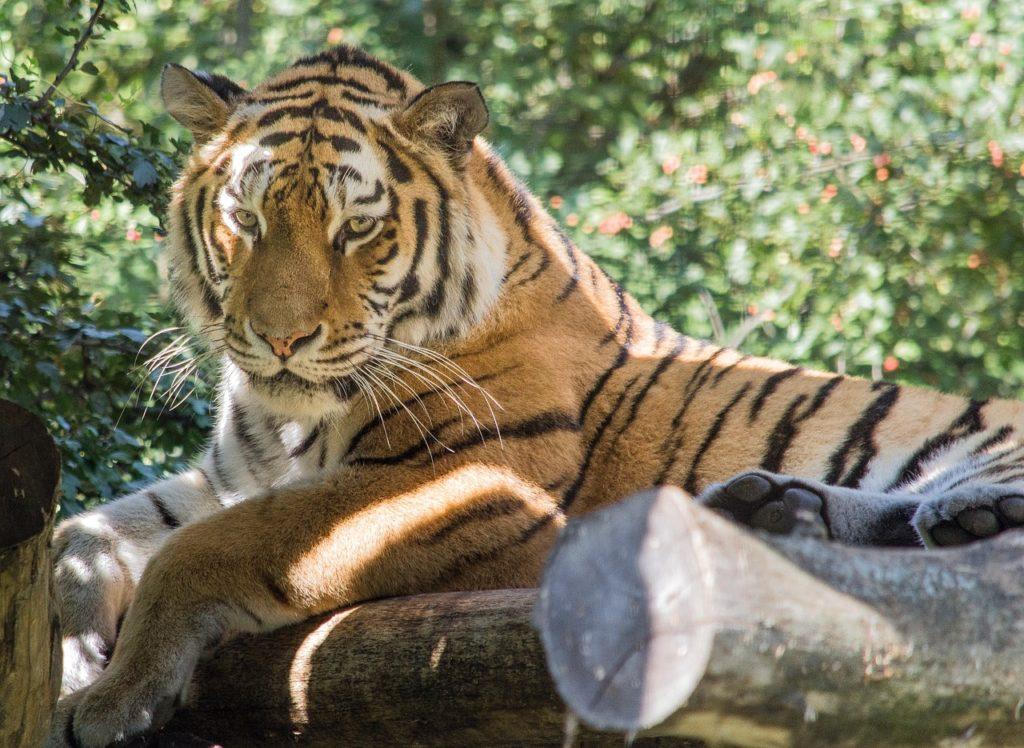 Tiergarten Schönbrunn Freunde finden Wien