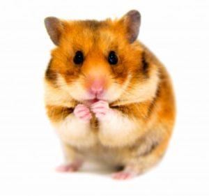 Hamsterrad befreie dich